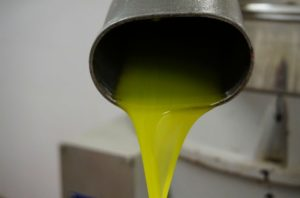 Discover the secrets of extra virgin olive oil
