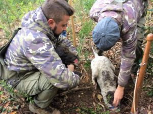 Truffle Hunting with local expert and his dog