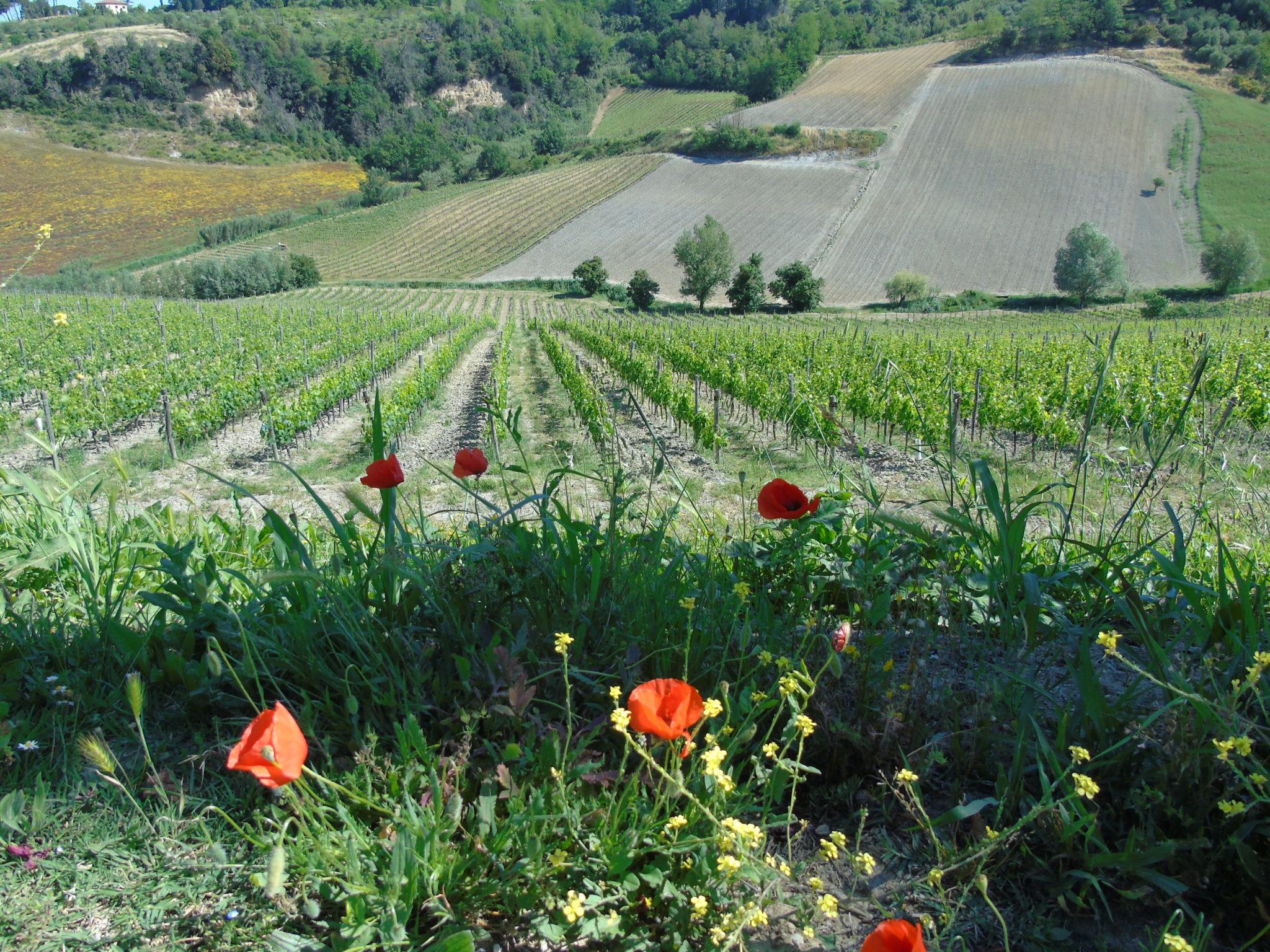 Sample wines of the region on a wine tasting tour